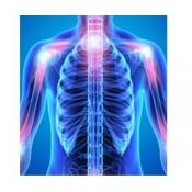 Bones - Articulations